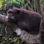 Monkey in Monkey Forest