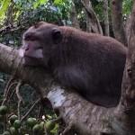 Monkey in Monkey Forest