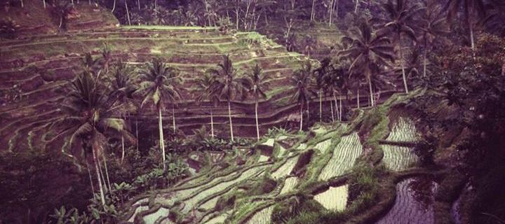 Indonesia – Ubud, Bali