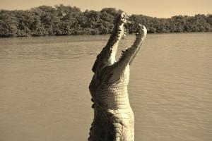 jumping-crocs-jump